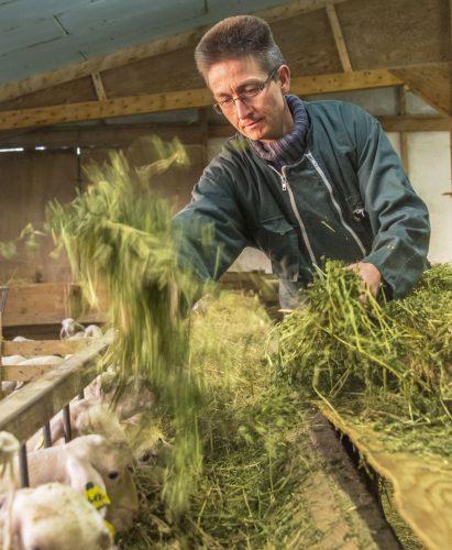 Brebis et production yaourt de la ferme de Valaye